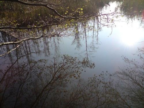 Wasserspiegelung im Nov. 2009
